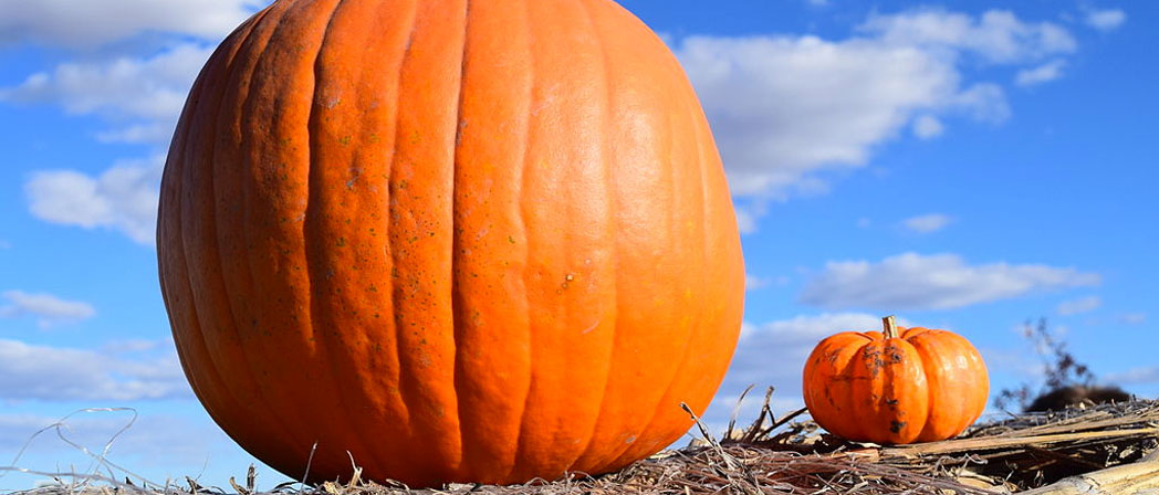 Comparing compressions between projects, is like comparing file size to pumpkins